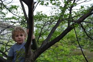"""climbing a tree wearing """"rattler"""""""
